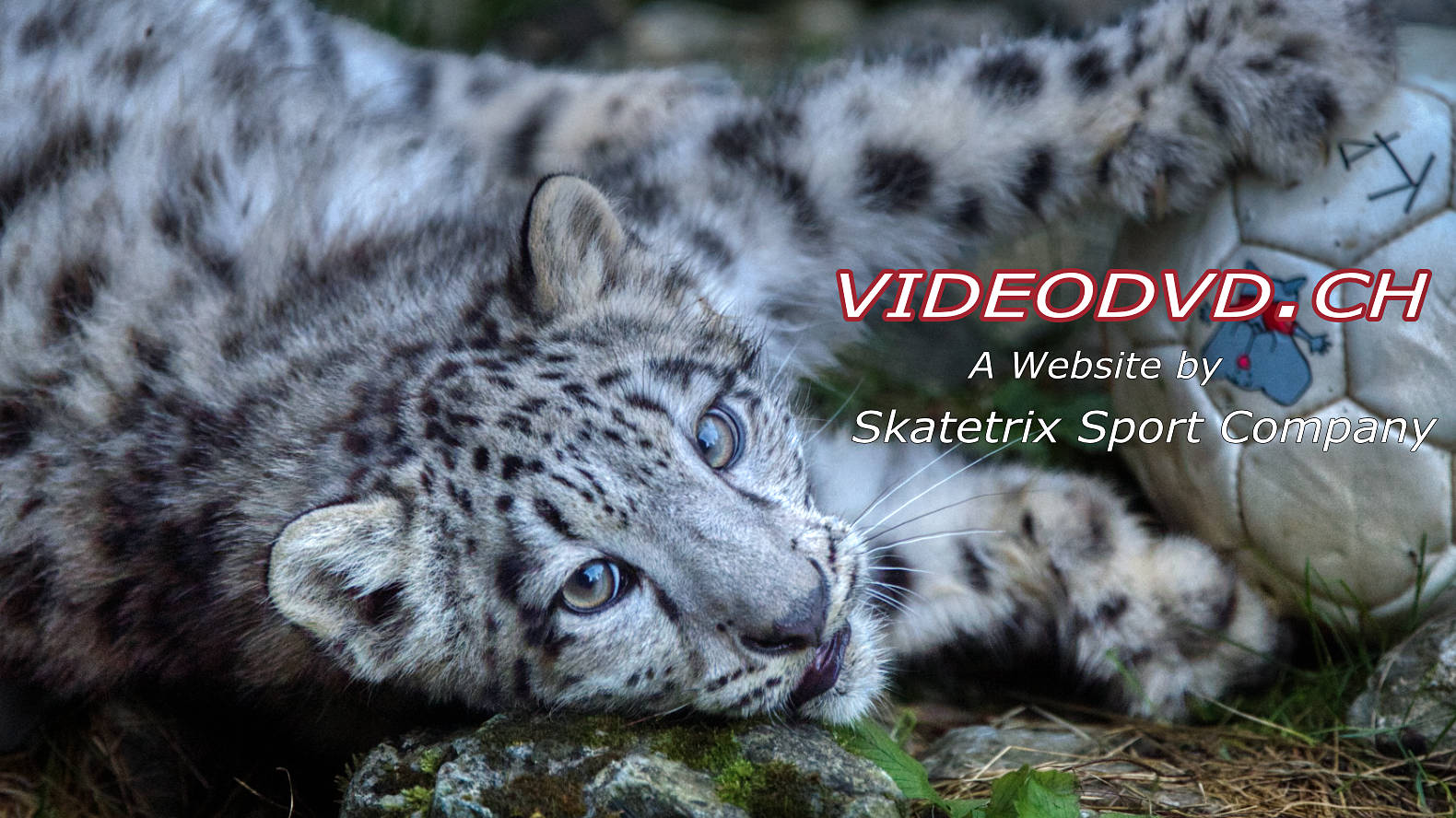 WELCOME AT VIDEODVD.CH - A responsive Website by Skatetrix Sport Company!