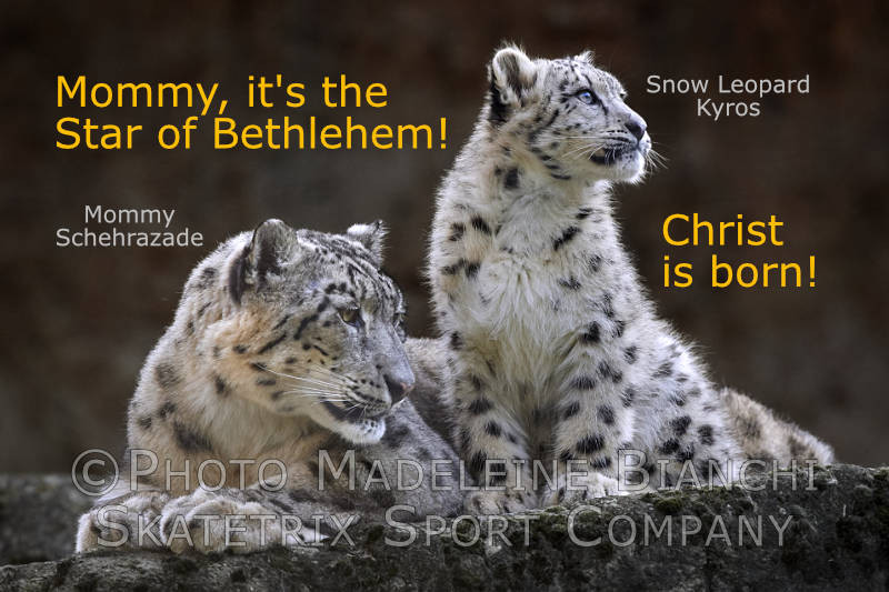 Snow Leopard KYROS - my pure, little heart sees the Birth of Christ!!