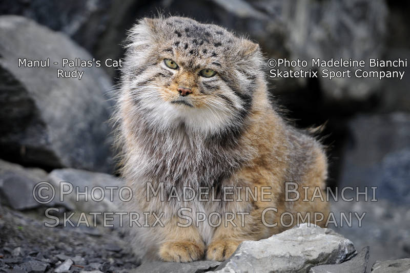 Manul RUDY - dedicated to the many, who really work!