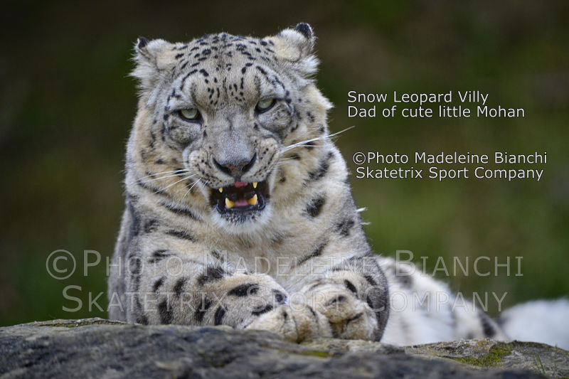 Snow Leopard VILLY - disinfect Switzerland of these communist pests!