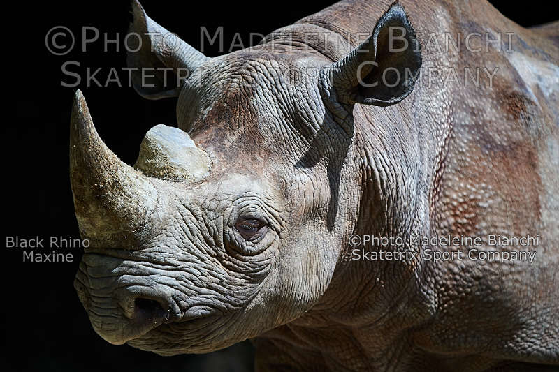Black Rhino MAXINE - Friedrich Nietzsche called man the disease of the world!