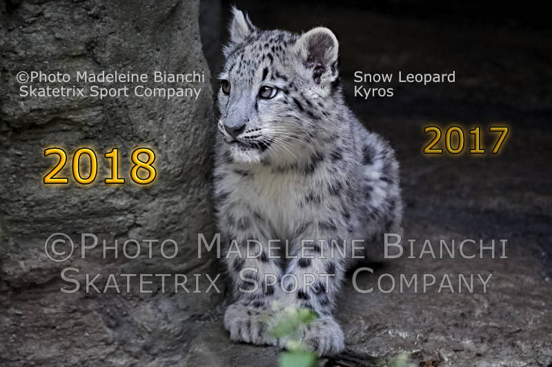 Snow Leopard KYROS - I appeal to people's remaining intelligence!