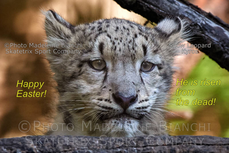 Snow Leopard KYROS - He made His promise true! - He is the eternal life!