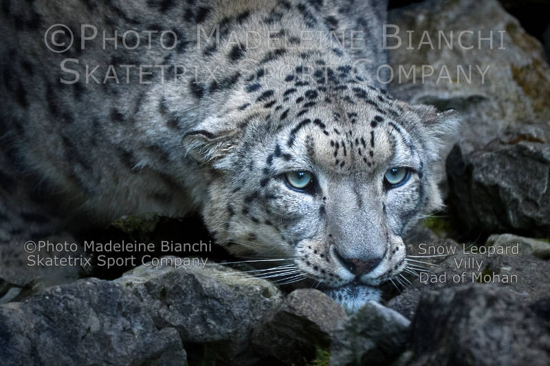 Little Snow Leopard VILLY - The future of civilized people - the brain death!