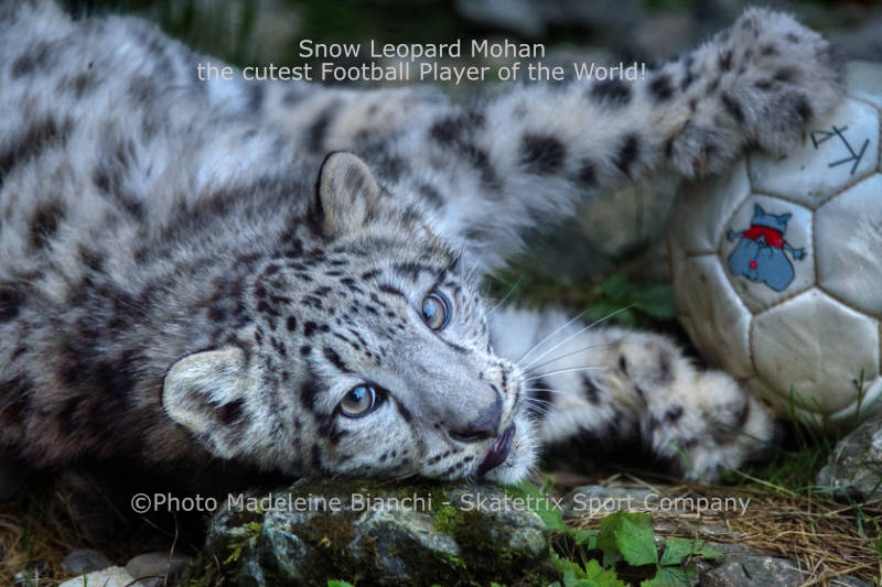 Little Snow Leopard MOHAN - Where the state ends, the human commences!