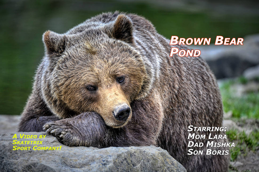 BROWN BEAR POOL - LARA - MISHKA - BORIS | wildlife - brown bear video clip