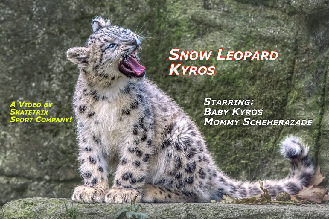 SNOW LEOPARD BABY KYROS | wildlife - big cat video clip