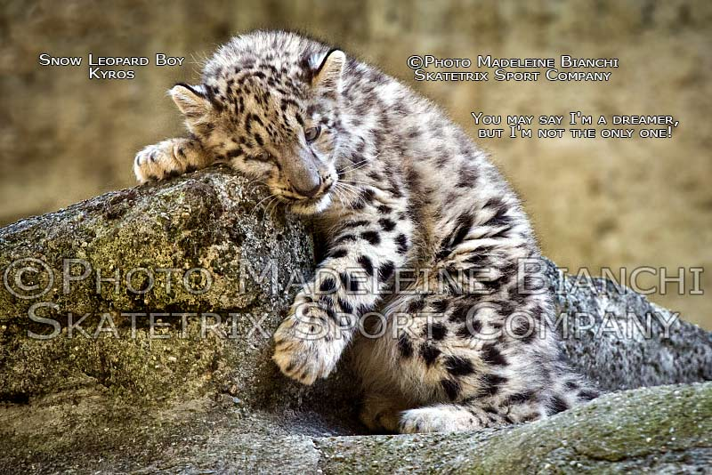 snow_leopard_boy_kyros_dream_rock_hdr_D4S3917.jpg