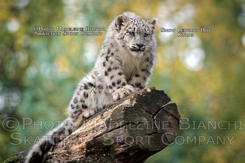 sow_leopard_boy_kyros_sit_log_watch_hdr_D4S5102.jpg